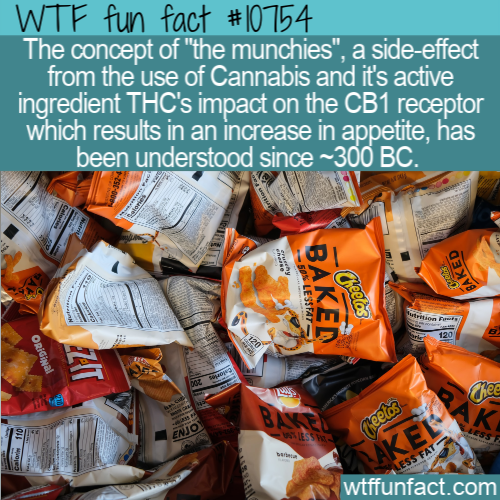 WTF Fun Fact - The Munchies