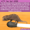 WTF Fun Fact – World's Smallest Chameleon