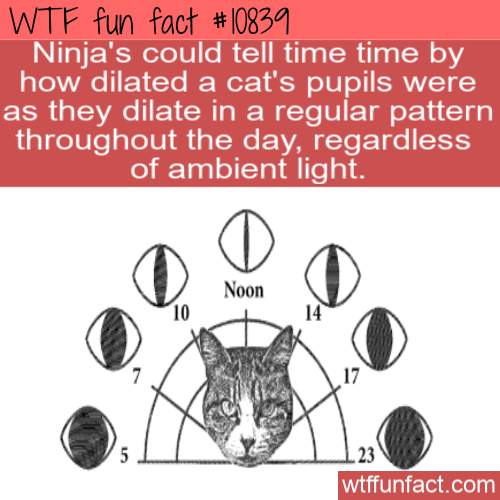 WTF Fun Fact - Cat's Eye Watch