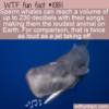 WTF Fun Fact – Deafening Whale Songs