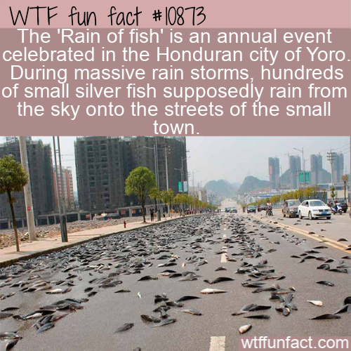 WTF Fun Fact - Fish From Storm