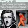 WTF Fun Fact – Estrogen In Hitler's Carrots
