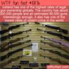 WTF Fun Fact – Icelanders Own Guns