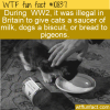 WTF Fun Fact – Illegal To Give Cat Milk