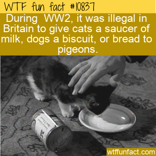 WTF Fun Fact - Illegal To Give Cat Milk