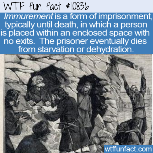 WTF Fun Fact - Immurement