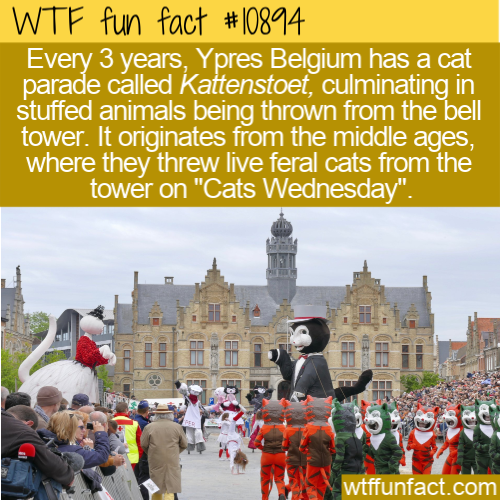 WTF Fun Fact - Kattenstoet