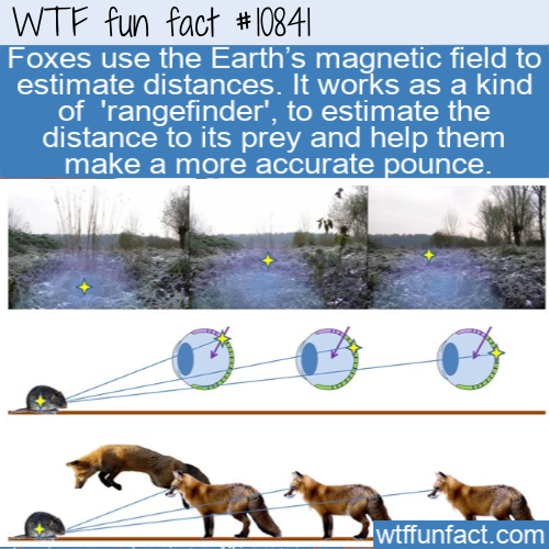 WTF Fun Fact - Measure Distances By Magnetic Field