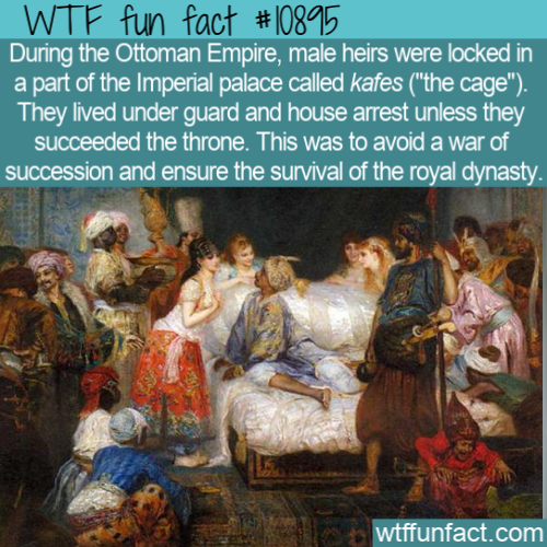 WTF Fun Fact - Ottomans Kafes