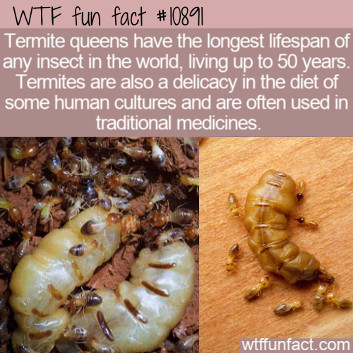 WTF Fun Fact - Queen Lives 50 Years