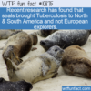 WTF Fun Fact – Seals & TB