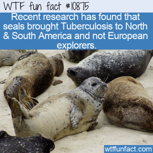 WTF Fun Fact - Seals TB