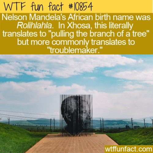 WTF Fun Fact - Troublemaker