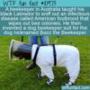 WTF Fun Fact – Bazz the Beekeeper