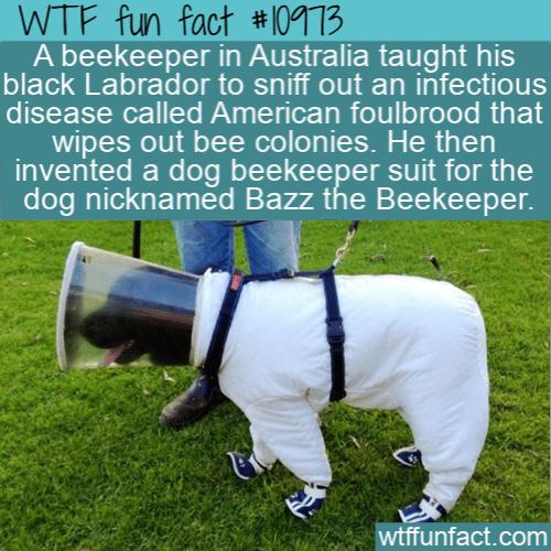 WTF Fun Fact - Bazz the Beekeeper