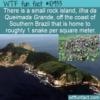 WTF Fun Fact – Snake Island