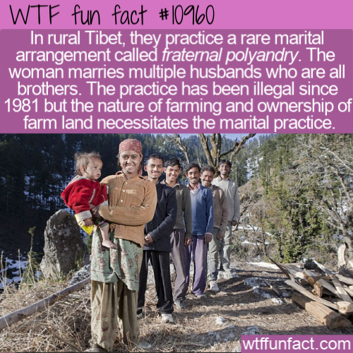 WTF Fun Fact - Brothers Live With Same Wife