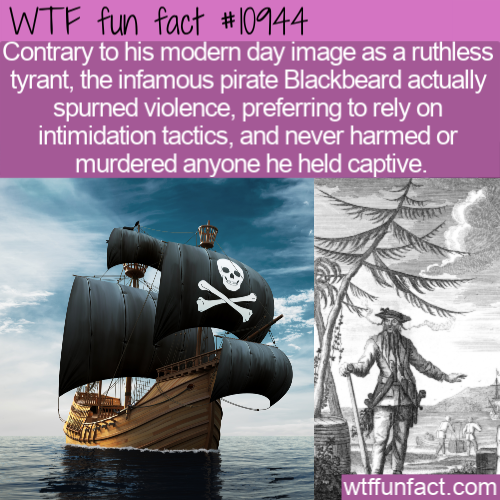 WTF Fun Fact - Gentle Blackbeard