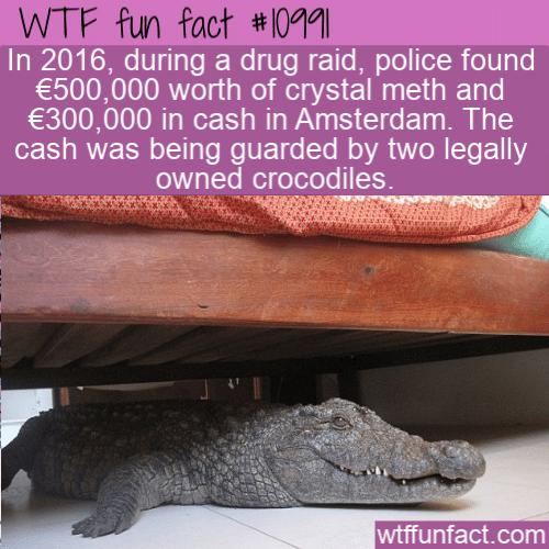 WTF Fun Fact - Guard Crocodiles