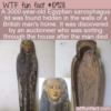 WTF Fun Fact – Sarcophagus Lid Found