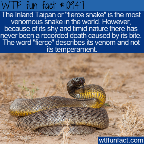 WTF Fun Fact - Most Venomous Snake