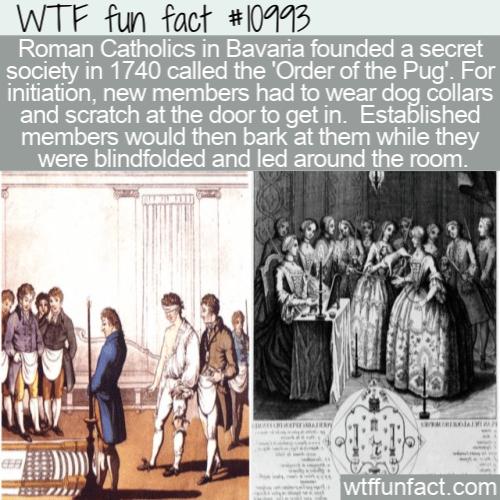 WTF Fun Fact - Order of the Pug
