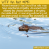 WTF Fun Fact – Rats Can Empathize