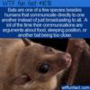 WTF Fun Fact – Bats Communicate Directly