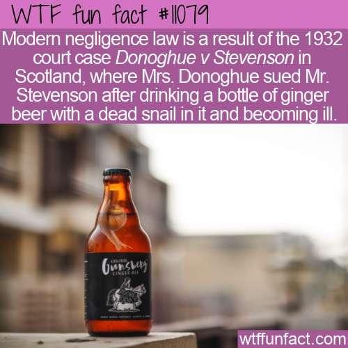 WTF Fun Fact - Dead Snail In A Beer