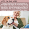WTF Fun Fact – Dog Owners Live Longer