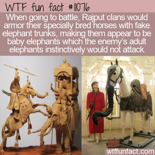 WTF Fun Fact - Fake Baby Elephants