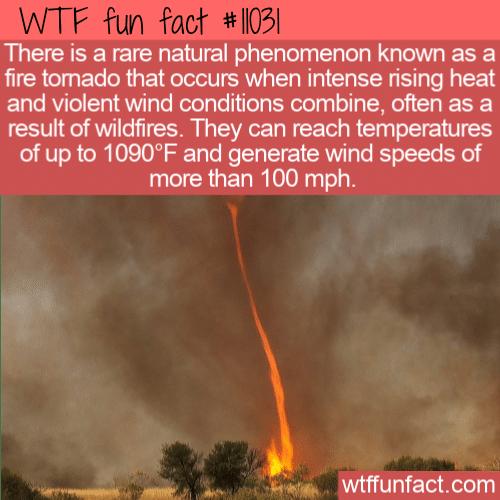 WTF Fun Fact - Fire Tornado