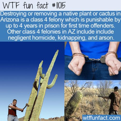 WTF Fun Fact - How Arizona Protects Cacti