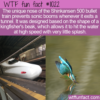 WTF Fun Fact – Skinkansen 500 & The Kingfisher