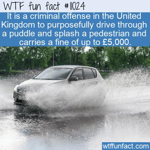 WTF Fun Fact - Splashing Is A Crime