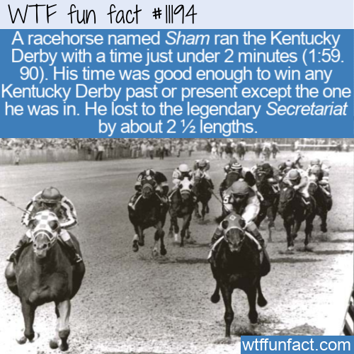 WTF Fun Fact - A Horseracing Sham