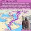 WTF Fun Fact –  An Eagle's Travels