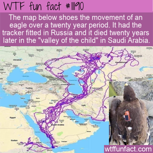 WTF Fun Fact - An Eagle's Travels