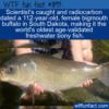 WTF Fun Fact –  Oldest Freshwater Bony Fish