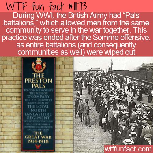 WTF Fun Fact - Pals Battalions