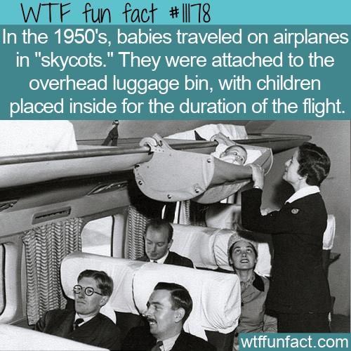 WTF Fun Fact - Skycots