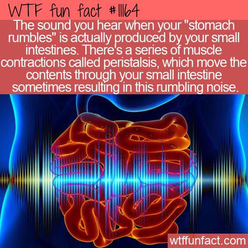 WTF Fun Fact - Stomach Rumbling?