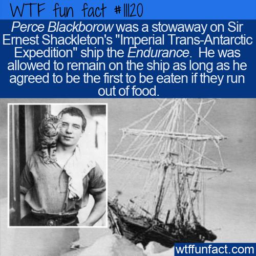 WTF Fun Fact - The Stowaway Perce Blackborow
