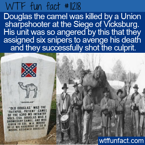 WTF Fun Fact - Douglas the Camel
