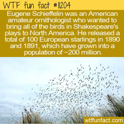 WTF Fun Fact - Eugene Schieffelin