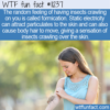 WTF Fun Fact – Formication