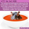 WTF Fun Fact – Hippopotamus Soup