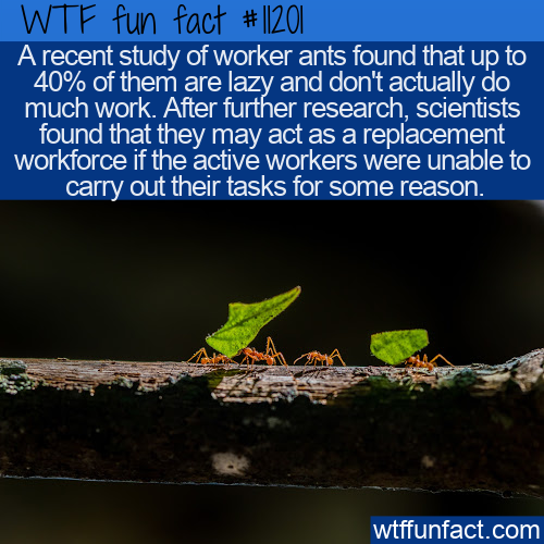 WTF Fun Fact - Lazy Worker Ants