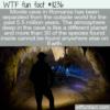 WTF Fun Fact – Movile Cave Romania