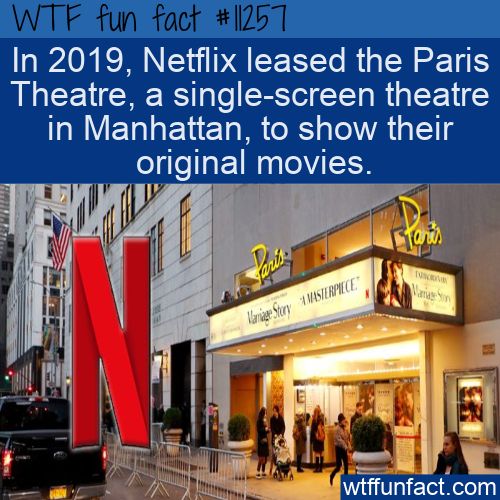 WTF Fun Fact - Netflix Comes Full Circle